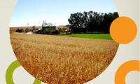 Imagem sobre a matéria: Brasil deve ultrapassar EUA na produção de soja, garantindo 50% do mercado mundial