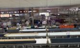 Iniciativas Sustentáveis: Cotton Star – Atitudes Responsáveis